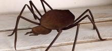 蜘蛛 小物入れ ¥12,000-